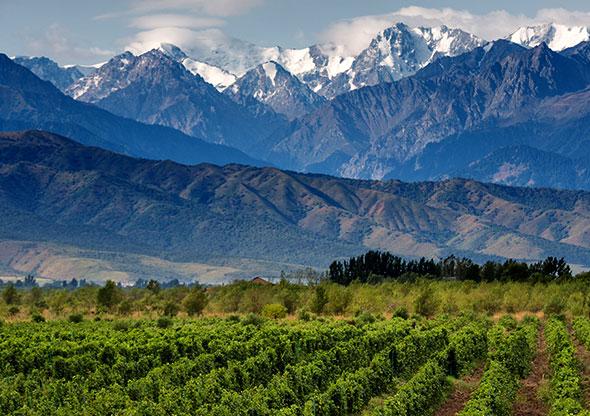 Argentina Wine Industry Mendoza